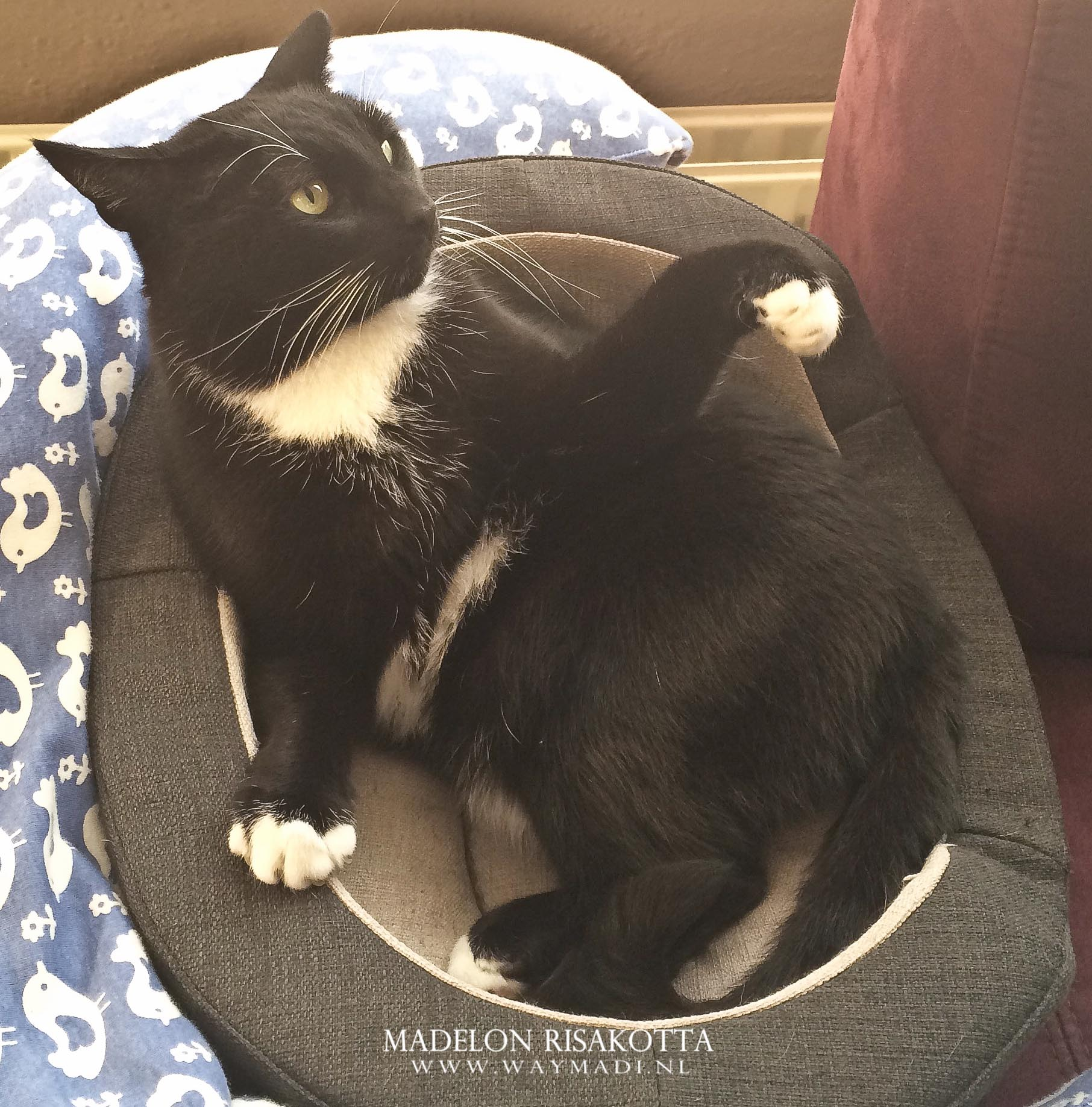 Blogger Basics | Originaliteit en Copycats