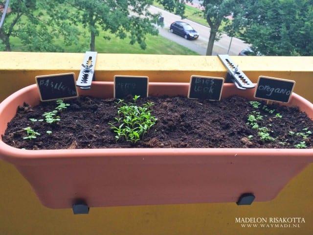 mama challenge groen op het balkon-2